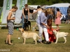 2013-08-04-lithuanian-retriever-club-show-w13img_5314