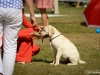 2013-08-04-lithuanian-retriever-club-show-w13img_5316