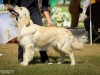 2013-08-04-lithuanian-retriever-club-show-w13img_5319