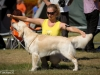 2013-08-04-lithuanian-retriever-club-show-w13img_5324