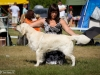 2013-08-04-lithuanian-retriever-club-show-w13img_5330
