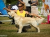 2013-08-04-lithuanian-retriever-club-show-w13img_5332