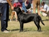 2013-08-04-lithuanian-retriever-club-show-w13img_5344