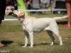 2013-08-04-lithuanian-retriever-club-show-w13img_5346
