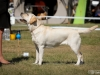 2013-08-04-lithuanian-retriever-club-show-w13img_5364