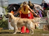 2013-08-04-lithuanian-retriever-club-show-w13img_5380