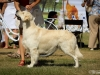 2013-08-04-lithuanian-retriever-club-show-w13img_5402