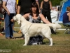 2013-08-04-lithuanian-retriever-club-show-w13img_5408