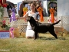 2013-08-04-lithuanian-retriever-club-show-w13img_5416
