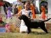 2013-08-04-lithuanian-retriever-club-show-w13img_5420