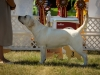 2013-08-04-lithuanian-retriever-club-show-w13img_5424
