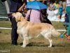 2013-08-04-lithuanian-retriever-club-show-w13img_5445
