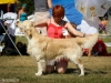 2013-08-04-lithuanian-retriever-club-show-w13img_5455