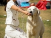 2013-08-04-lithuanian-retriever-club-show-w13img_5459