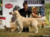 2013-08-04-lithuanian-retriever-club-show-w13img_5471