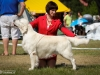 2013-08-04-lithuanian-retriever-club-show-w13img_5476