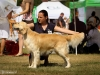 2013-08-04-lithuanian-retriever-club-show-w13img_5478