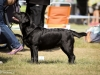 2013-08-04-lithuanian-retriever-club-show-w13img_5482