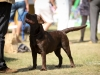 2013-08-04-lithuanian-retriever-club-show-w13img_5485