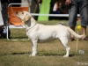2013-08-04-lithuanian-retriever-club-show-w13img_5489