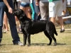 2013-08-04-lithuanian-retriever-club-show-w13img_5493