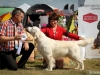 2013-08-04-lithuanian-retriever-club-show-w13img_5508