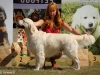 2013-08-04-lithuanian-retriever-club-show-w13img_5510
