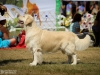 2013-08-04-lithuanian-retriever-club-show-w13img_5511
