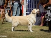 2013-08-04-lithuanian-retriever-club-show-w13img_5521