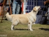 2013-08-04-lithuanian-retriever-club-show-w13img_5525