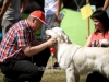 2013-08-04-lithuanian-retriever-club-show-w13img_5530
