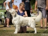 2013-08-04-lithuanian-retriever-club-show-w13img_5571
