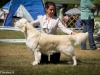 2013-08-04-lithuanian-retriever-club-show-w13img_5612