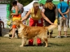 2013-08-04-lithuanian-retriever-club-show-w13img_5619