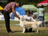 2013-08-04-lithuanian-retriever-club-show-w13img_5623