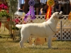 2013-08-04-lithuanian-retriever-club-show-w13img_5628