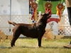 2013-08-04-lithuanian-retriever-club-show-w13img_5641
