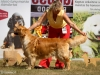 2013-08-04-lithuanian-retriever-club-show-w13img_5652