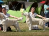 2013-08-04-lithuanian-retriever-club-show-w13img_5658