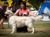 2013-08-04-lithuanian-retriever-club-show-w13img_5664