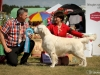 2013-08-04-lithuanian-retriever-club-show-w13img_5670