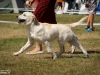 2013-08-04-lithuanian-retriever-club-show-w13img_5692