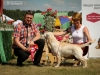 2013-08-04-lithuanian-retriever-club-show-w13img_5707