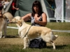 2013-08-04-lithuanian-retriever-club-show-w13img_5729