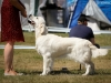 2013-08-04-lithuanian-retriever-club-show-w13img_5736
