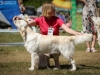2013-08-04-lithuanian-retriever-club-show-w13img_5741