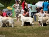2013-08-04-lithuanian-retriever-club-show-w13img_5742