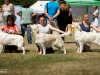 2013-08-04-lithuanian-retriever-club-show-w13img_5746