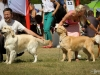 2013-08-04-lithuanian-retriever-club-show-w13img_5748
