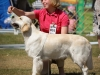 2013-08-04-lithuanian-retriever-club-show-w13img_5761